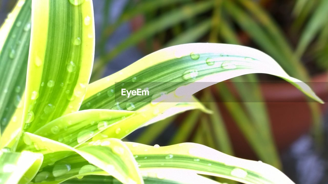 growth, plant, green color, leaf, nature, freshness, close-up, beauty in nature, outdoors, day, no people, fragility, water