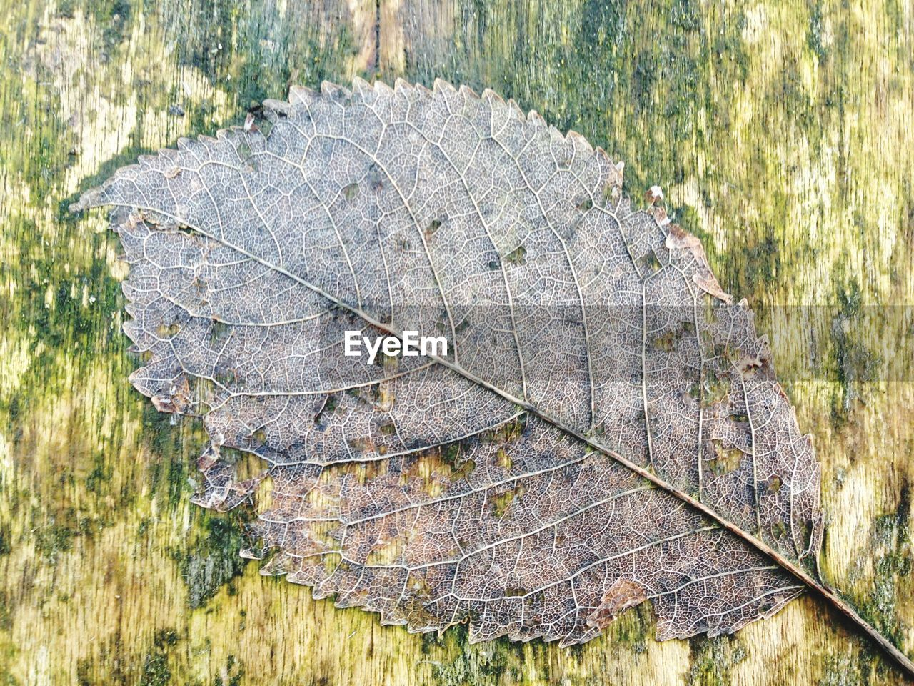 plant, nature, day, close-up, leaf vein, dry, no people, leaf, plant part, outdoors, wood - material, natural pattern, autumn, textured, tree, directly above, vulnerability, change, high angle view, land, bark, leaves