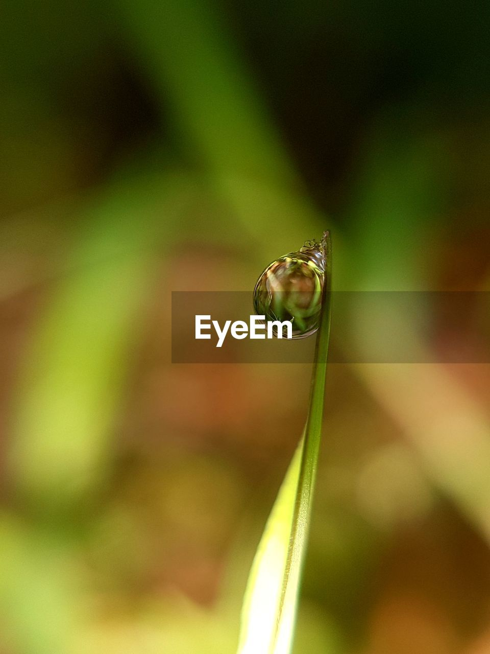 close-up, green color, plant, animal themes, animal, one animal, selective focus, beauty in nature, animals in the wild, growth, animal wildlife, focus on foreground, no people, nature, day, invertebrate, insect, fragility, outdoors, vulnerability, blade of grass, purity