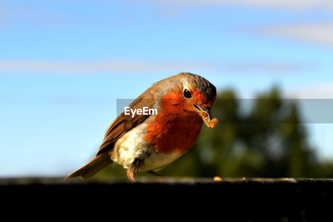 Close-Up Of Bird With Food