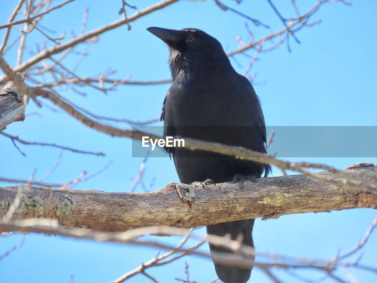 vertebrate, animal themes, branch, animal, one animal, bird, perching, animal wildlife, low angle view, tree, animals in the wild, sky, plant, nature, no people, day, outdoors, blue, selective focus, wood - material