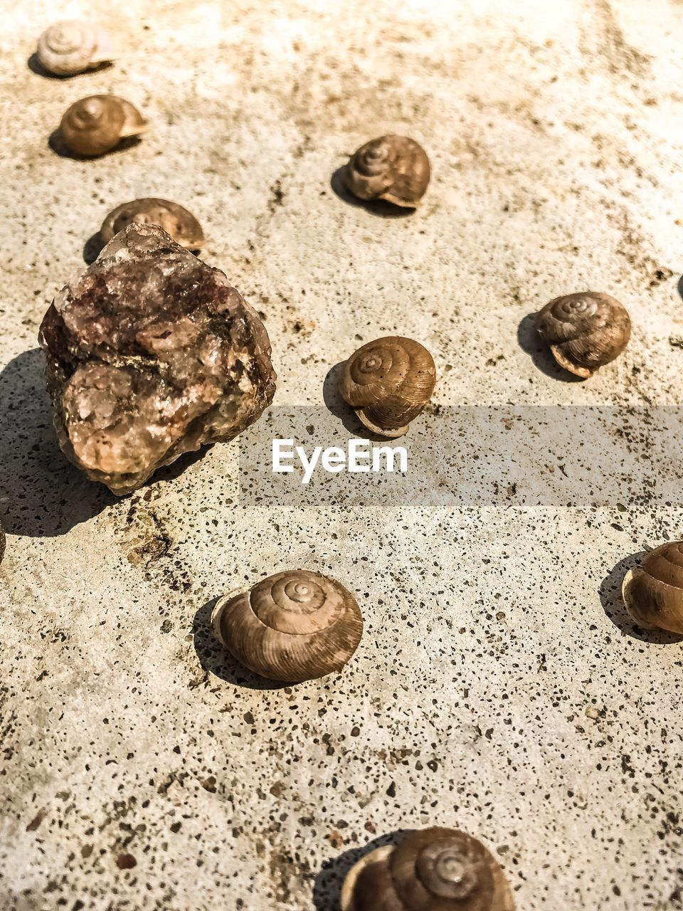 close-up, land, nature, high angle view, no people, beach, group of objects, large group of objects, day, food and drink, still life, sand, sunlight, indoors, directly above, shell, selective focus, brown, food, pebble