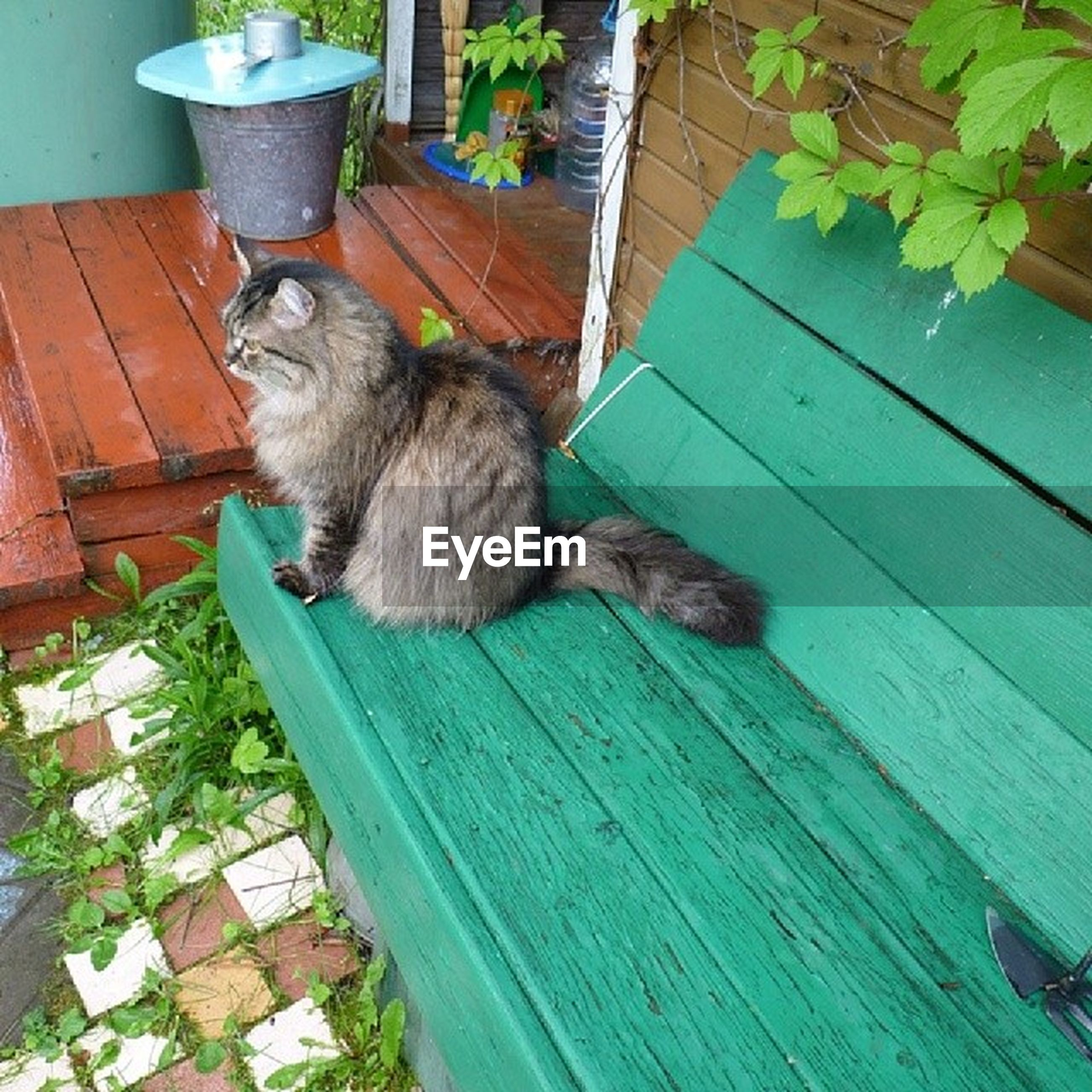 domestic cat, animal themes, pets, one animal, domestic animals, cat, mammal, feline, wood - material, relaxation, potted plant, front or back yard, sitting, house, high angle view, plant, whisker, full length, leaf, no people