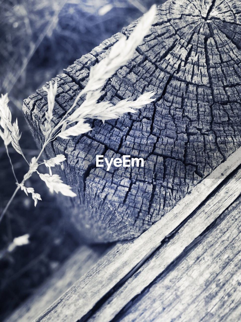 wood - material, textured, no people, cracked, nature, close-up, outdoors, day, tree, dead plant, tree trunk, tree stump, cold temperature