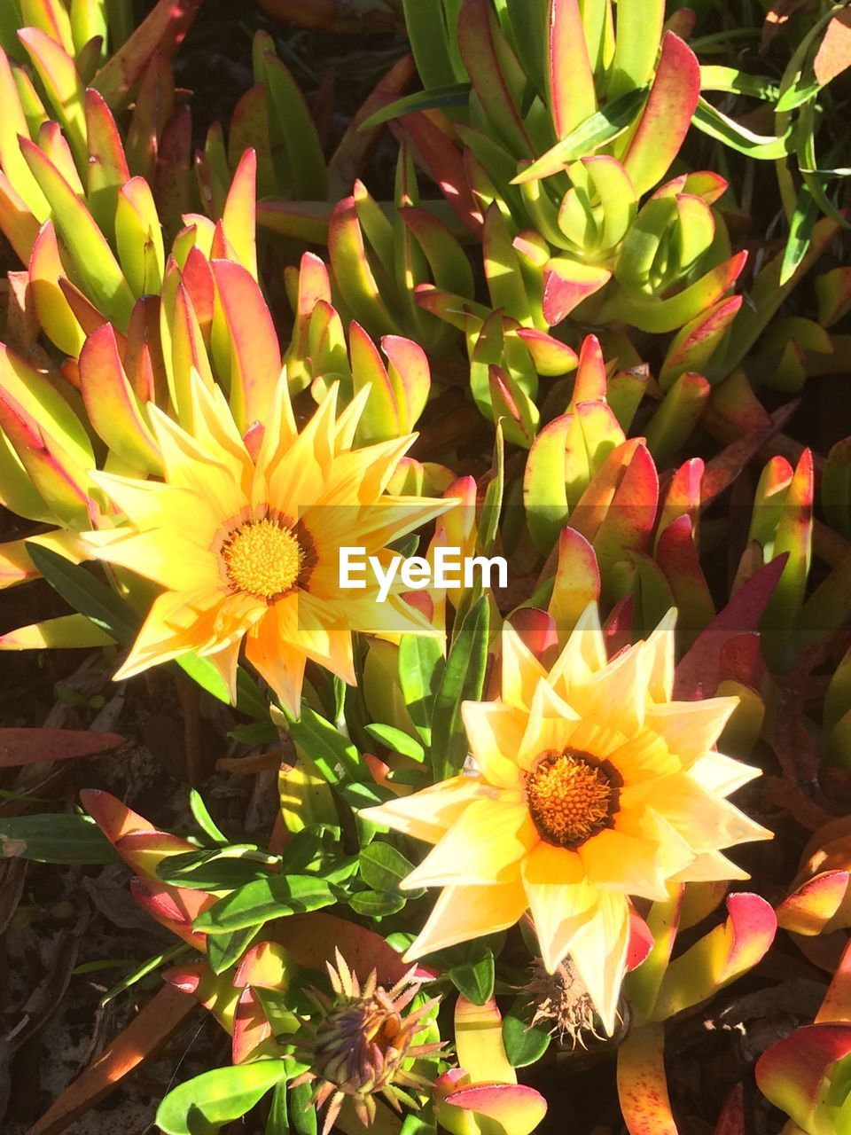 flower, petal, freshness, nature, growth, beauty in nature, plant, fragility, flower head, yellow, no people, blooming, outdoors, day, close-up
