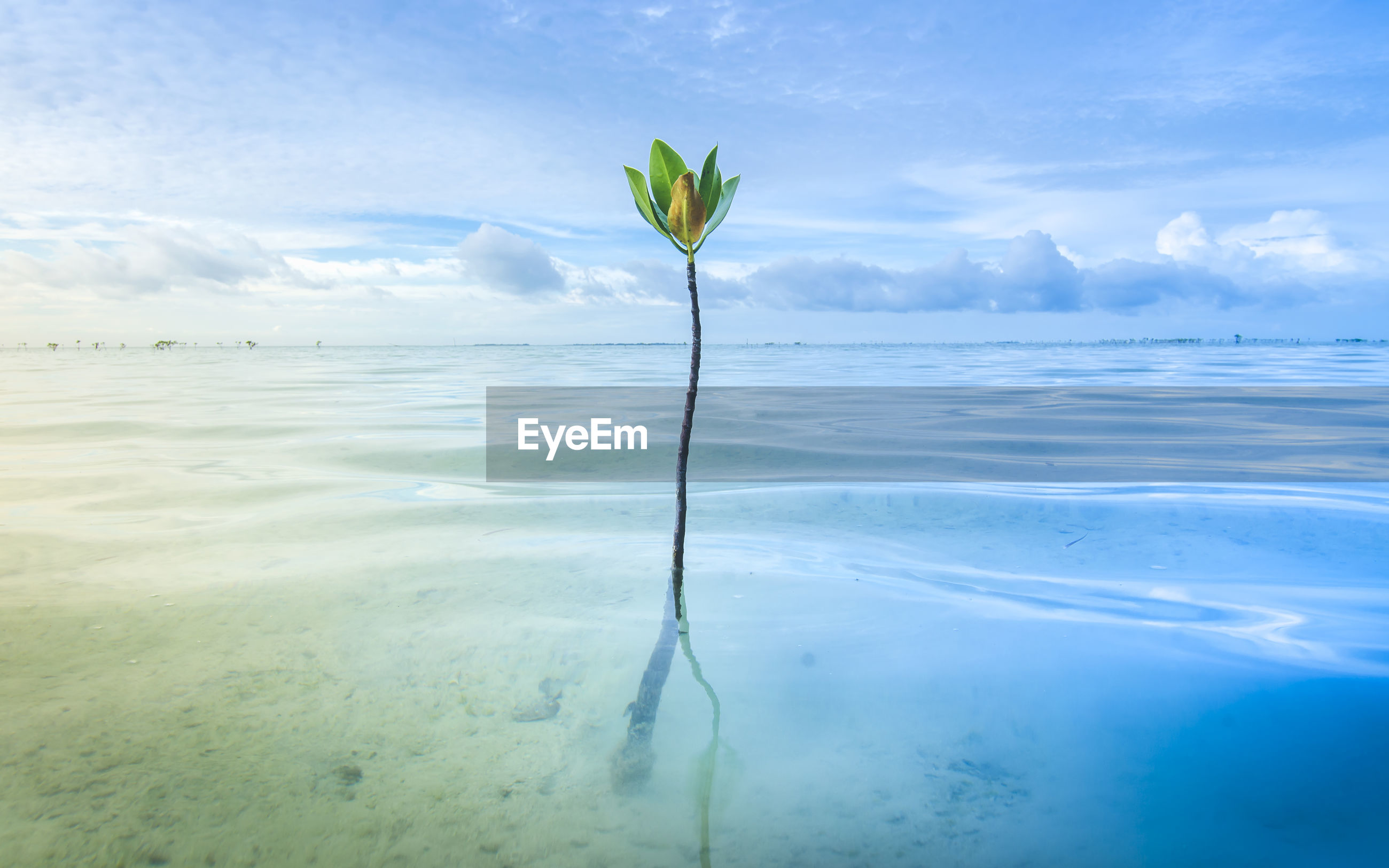 Plant in sea against sky