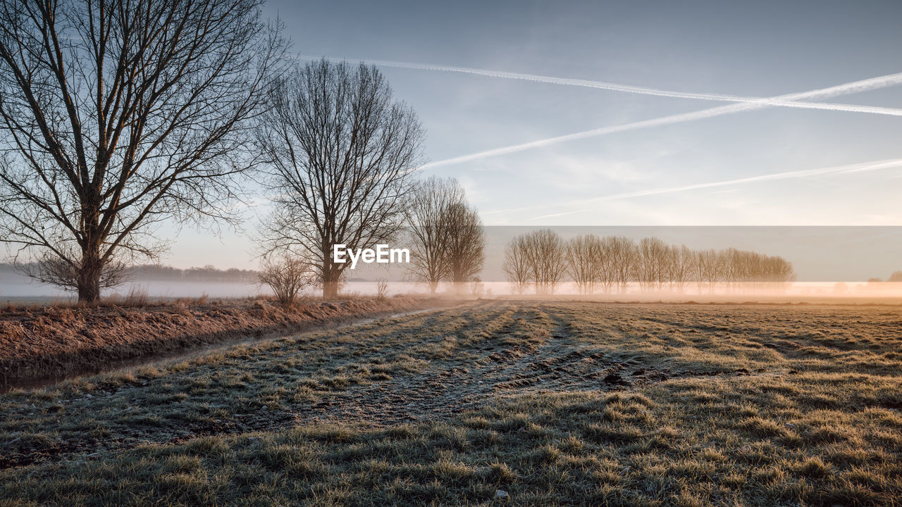 Bare Trees On Field Against Vapor Trails During Foggy Weather