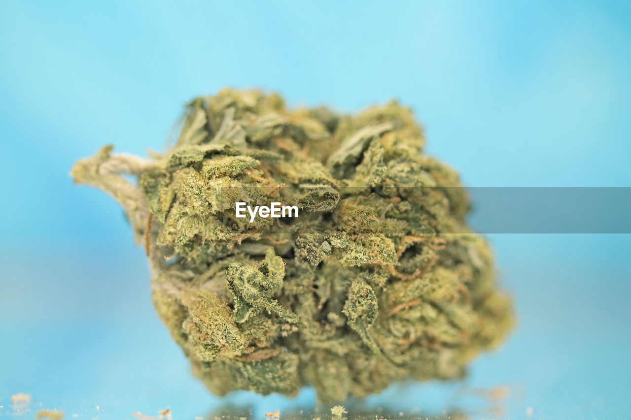 close-up, selective focus, marijuana - herbal cannabis, cannabis plant, plant, no people, healthcare and medicine, blue, indoors, narcotic, food and drink, focus on foreground, green color, nature, food, medicine, still life, herbal medicine, studio shot, medical cannabis, blue background