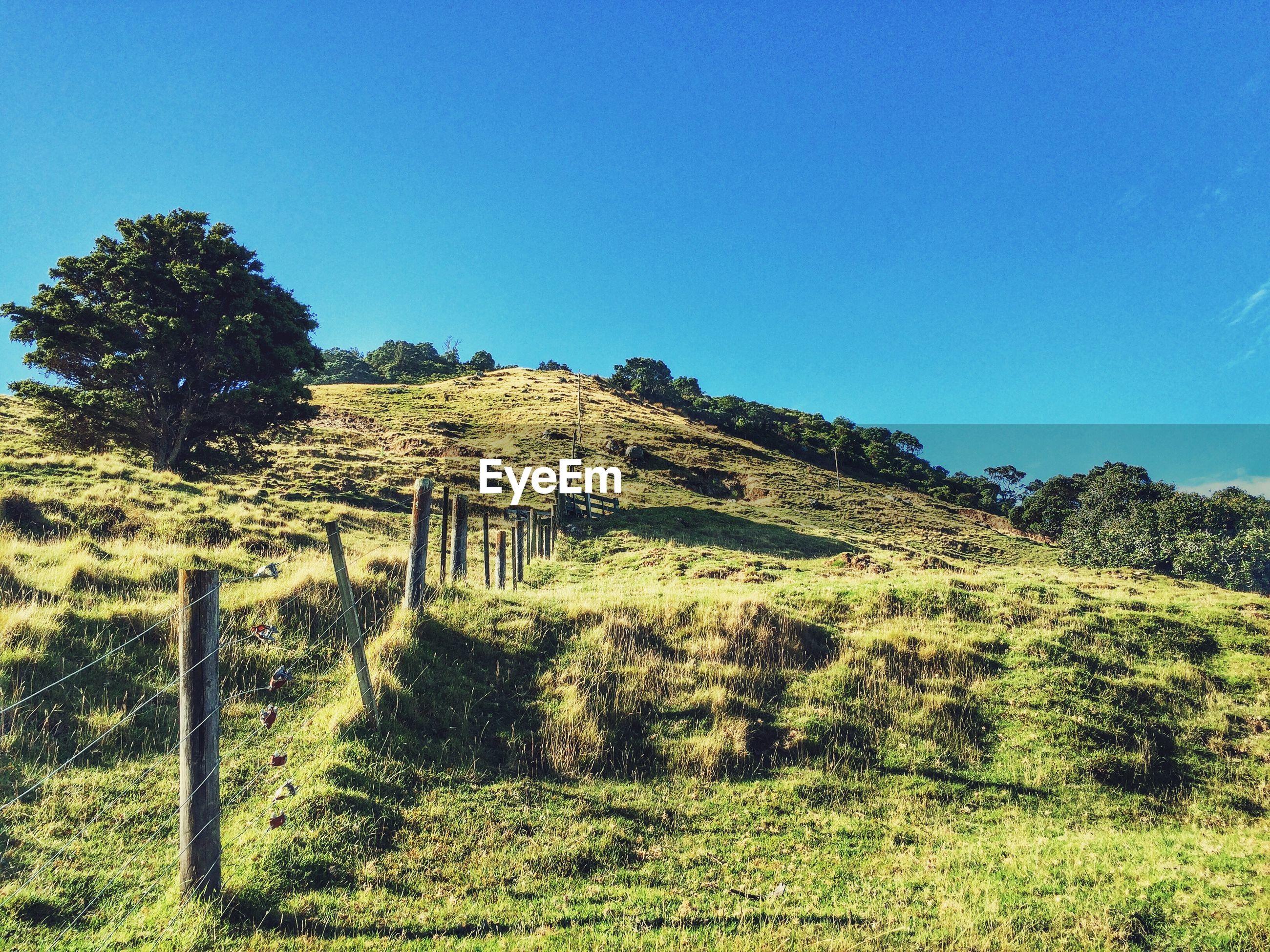 Grassy hill against sky