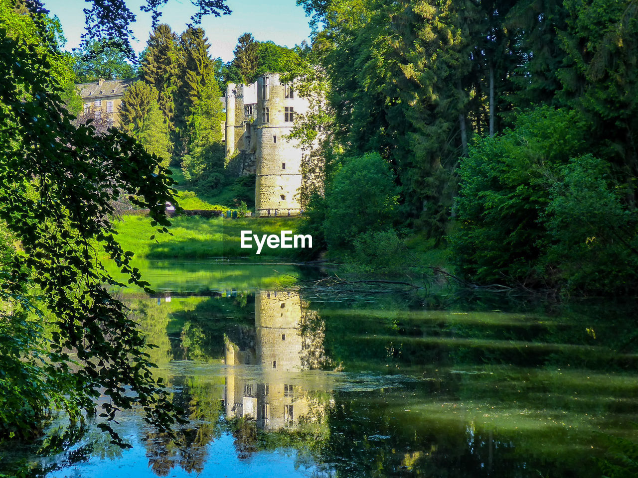 water, plant, tree, nature, green color, reflection, built structure, building exterior, lake, architecture, building, tranquility, day, no people, beauty in nature, scenics - nature, outdoors, growth, tranquil scene