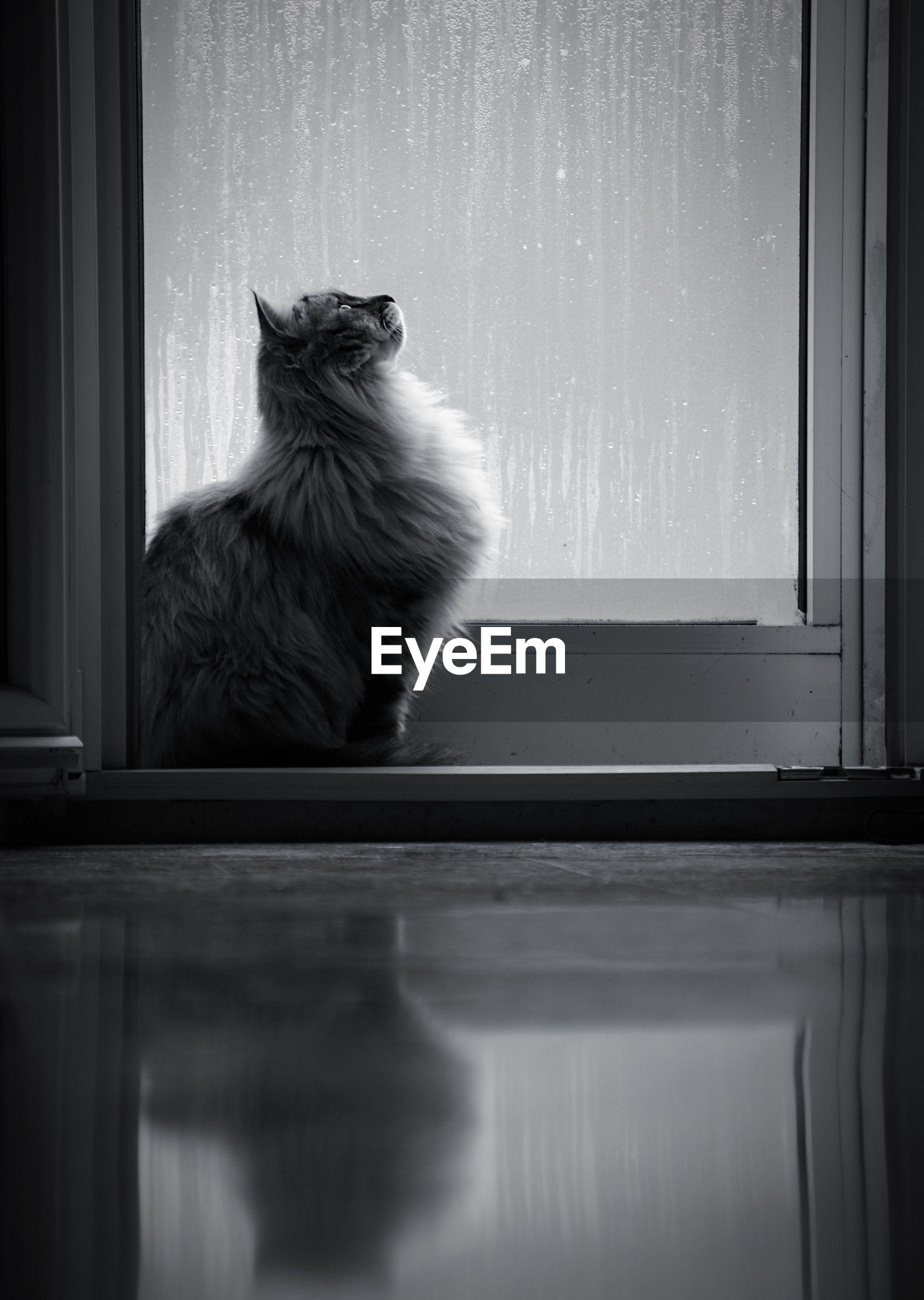 CAT LOOKING AWAY ON WINDOW SILL