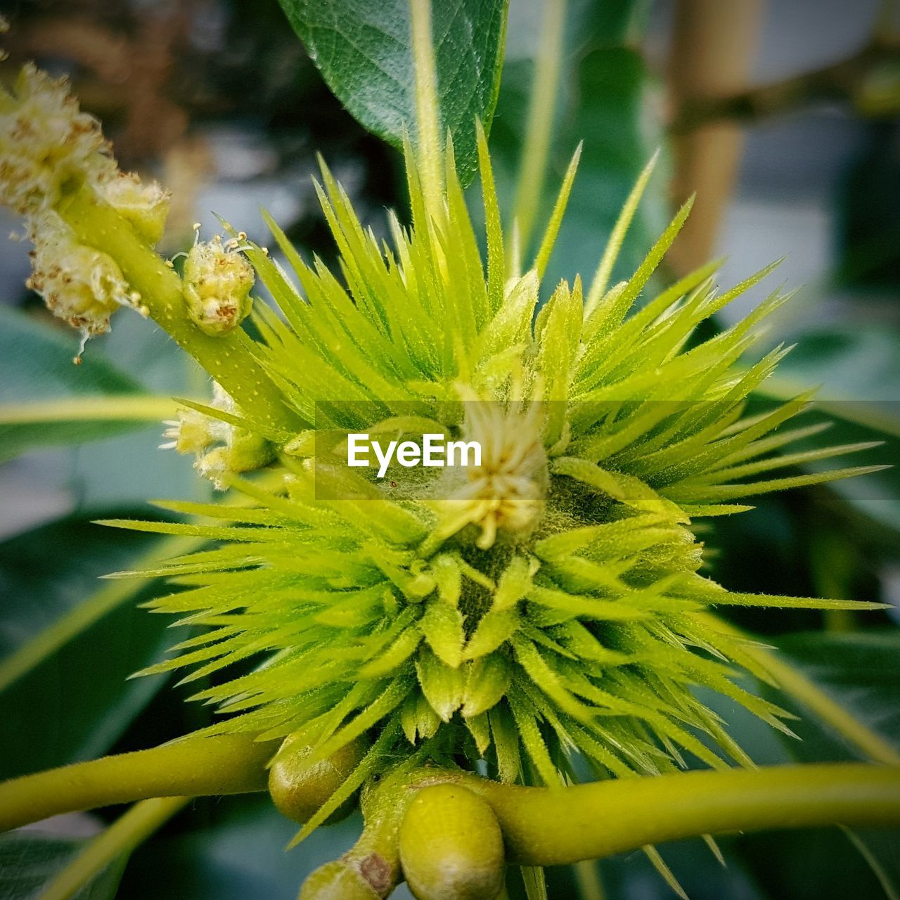 plant, growth, beauty in nature, close-up, flower, flowering plant, freshness, vulnerability, fragility, focus on foreground, no people, day, nature, green color, flower head, inflorescence, selective focus, outdoors, yellow, petal, pollen, sepal