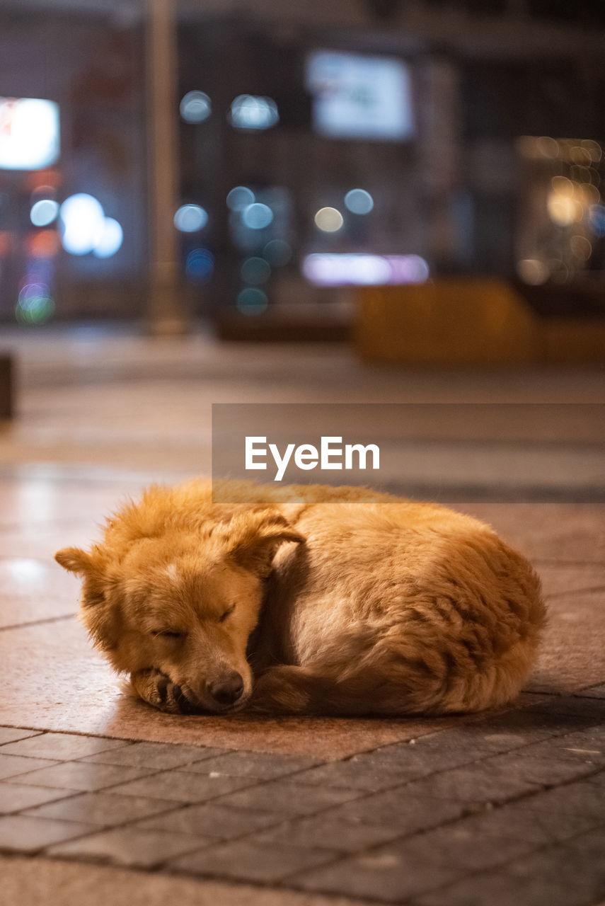 DOG SLEEPING IN THE DARK