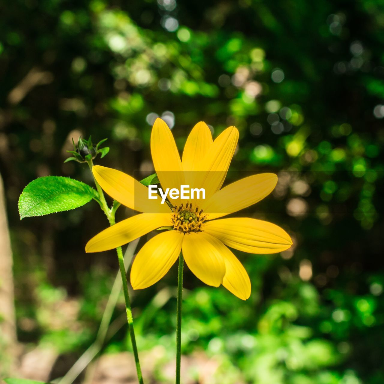 flower, yellow, petal, growth, nature, fragility, beauty in nature, flower head, plant, freshness, blooming, day, outdoors, close-up, no people