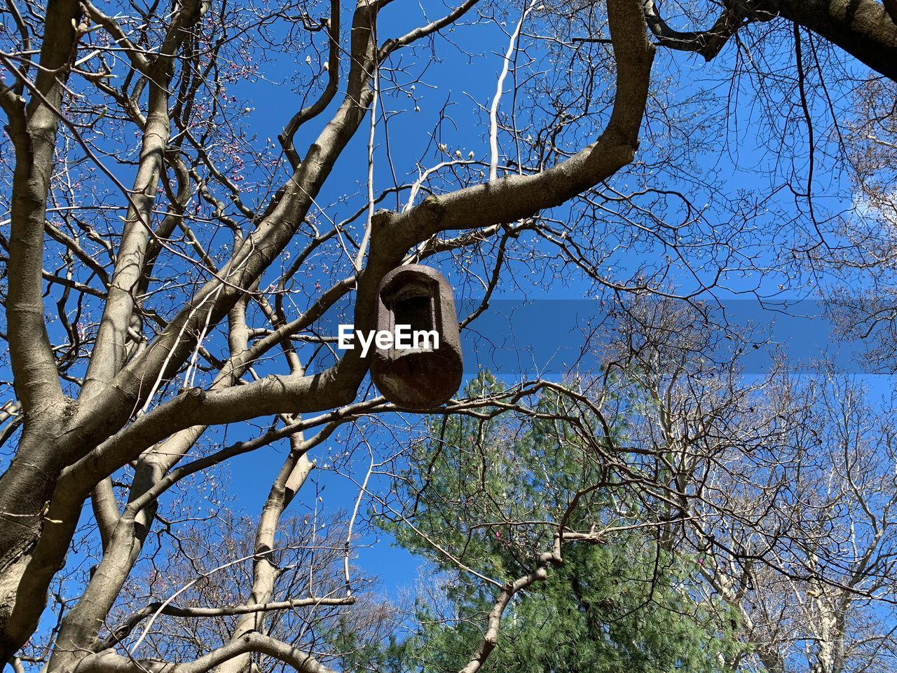tree, branch, low angle view, plant, bare tree, sky, nature, vertebrate, animals in the wild, animal themes, no people, day, bird, animal wildlife, animal, trunk, tree trunk, clear sky, perching, outdoors