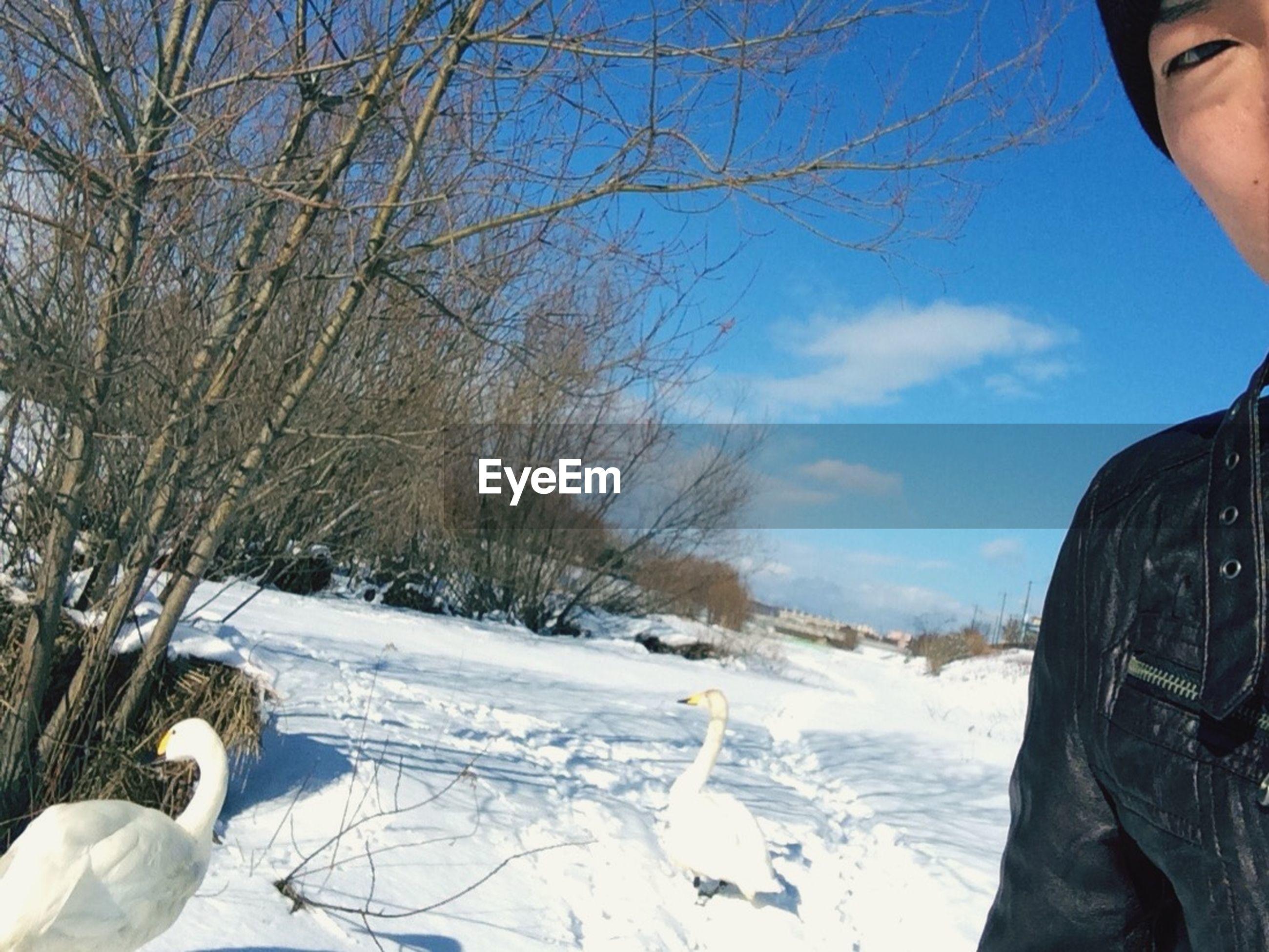 snow, cold temperature, winter, season, frozen, part of, person, bare tree, tree, weather, unrecognizable person, sky, lifestyles, cropped, leisure activity, white color, nature
