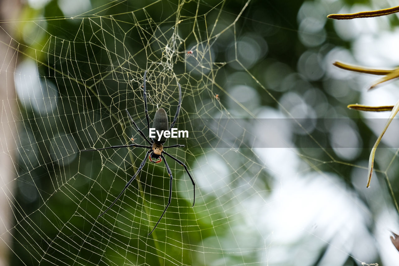 spider web, animal themes, animal, fragility, animal wildlife, animals in the wild, invertebrate, arachnid, close-up, focus on foreground, arthropod, one animal, spider, insect, no people, vulnerability, day, nature, survival, zoology, outdoors, web, animal leg