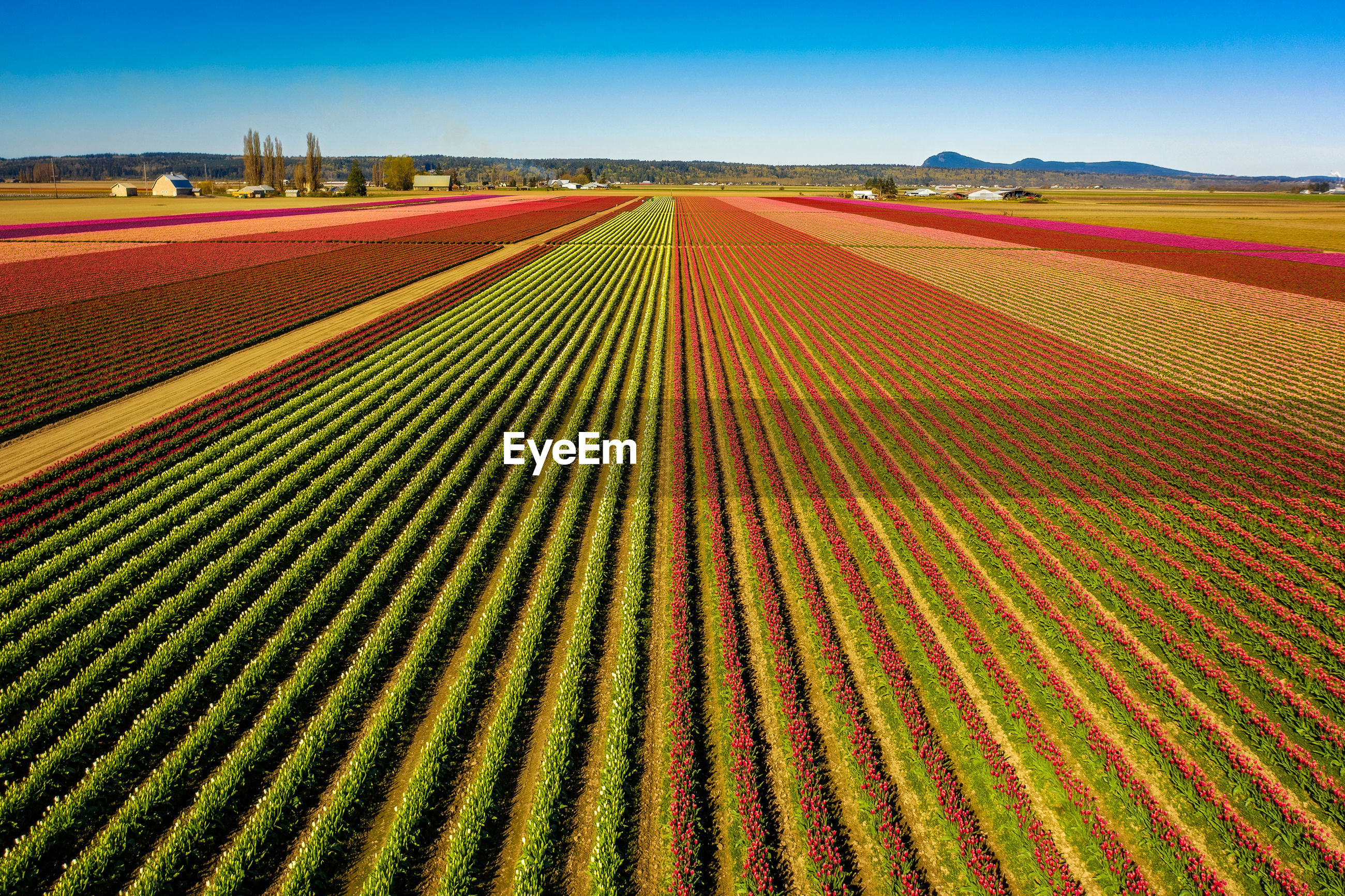FULL FRAME SHOT OF MULTI COLORED AGRICULTURAL FIELD