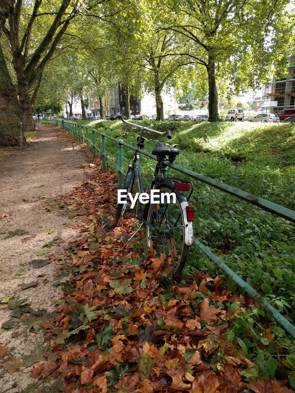 tree, leaf, plant, bicycle, plant part, autumn, transportation, nature, day, park, mode of transportation, land, no people, change, park - man made space, tree trunk, falling, trunk, land vehicle, footpath, outdoors, leaves