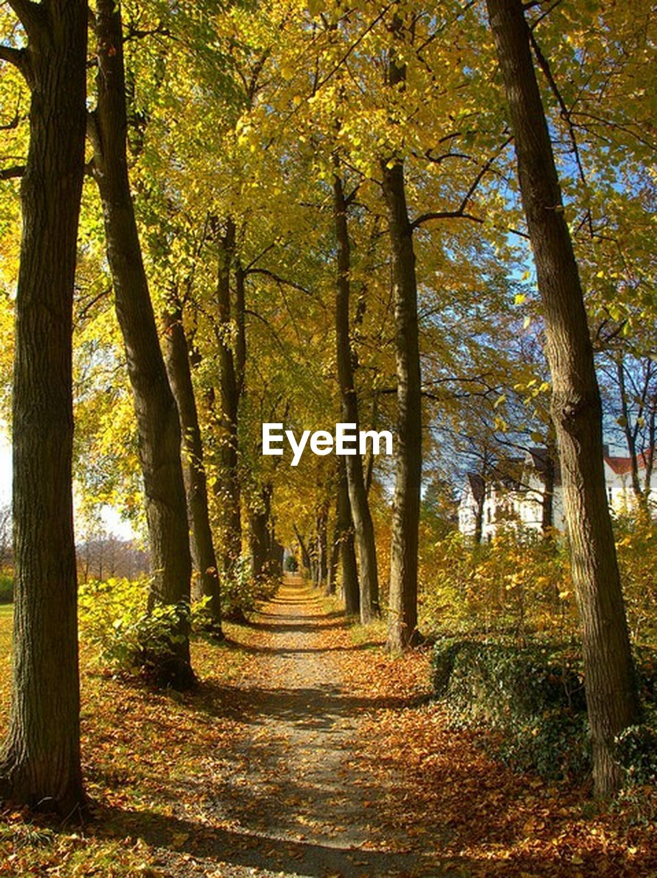 autumn, leaf, change, tree, nature, forest, beauty in nature, scenics, the way forward, footpath, tranquil scene, tranquility, sunlight, outdoors, tree trunk, landscape, day, single lane road, no people, travel destinations, yellow, growth, branch, multi colored