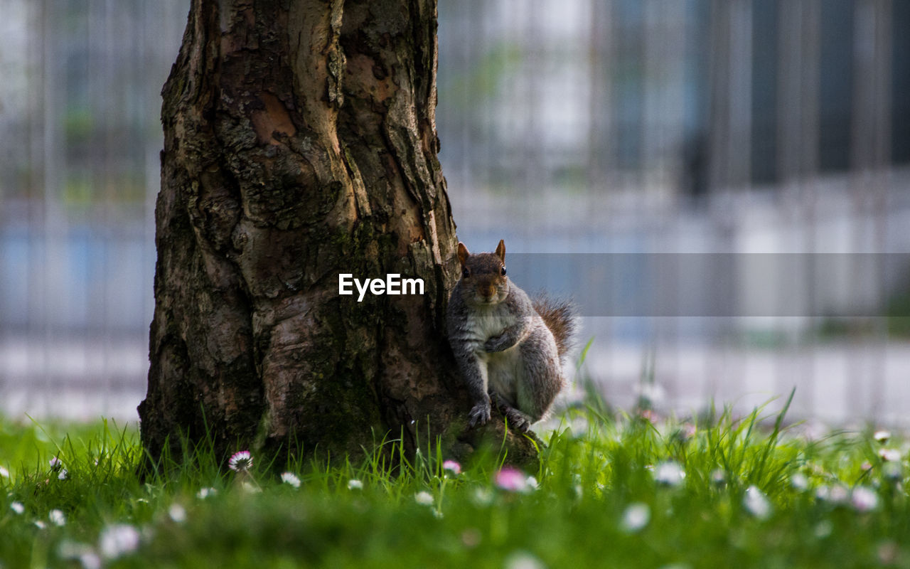 Squirrel by tree trunk
