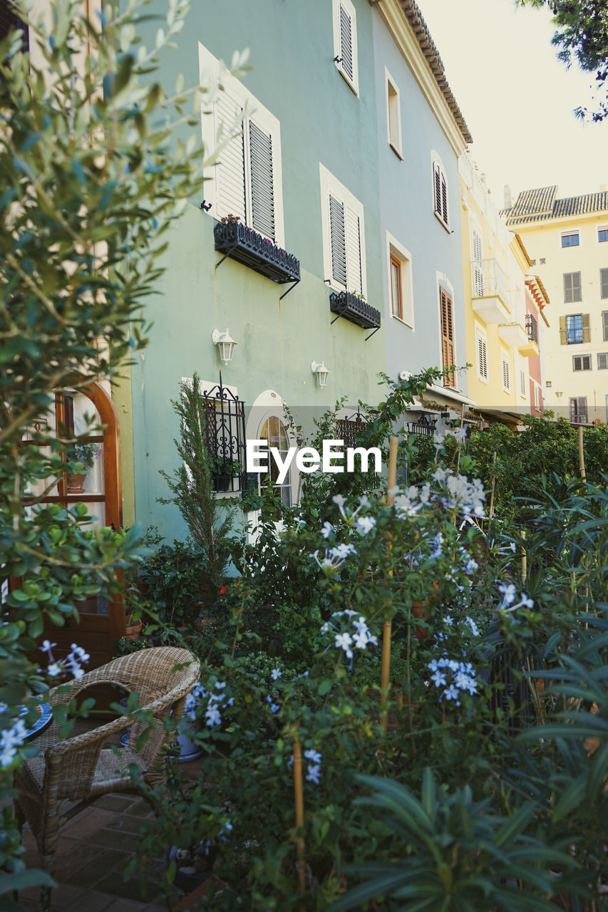 HOUSES AND PLANTS IN YARD