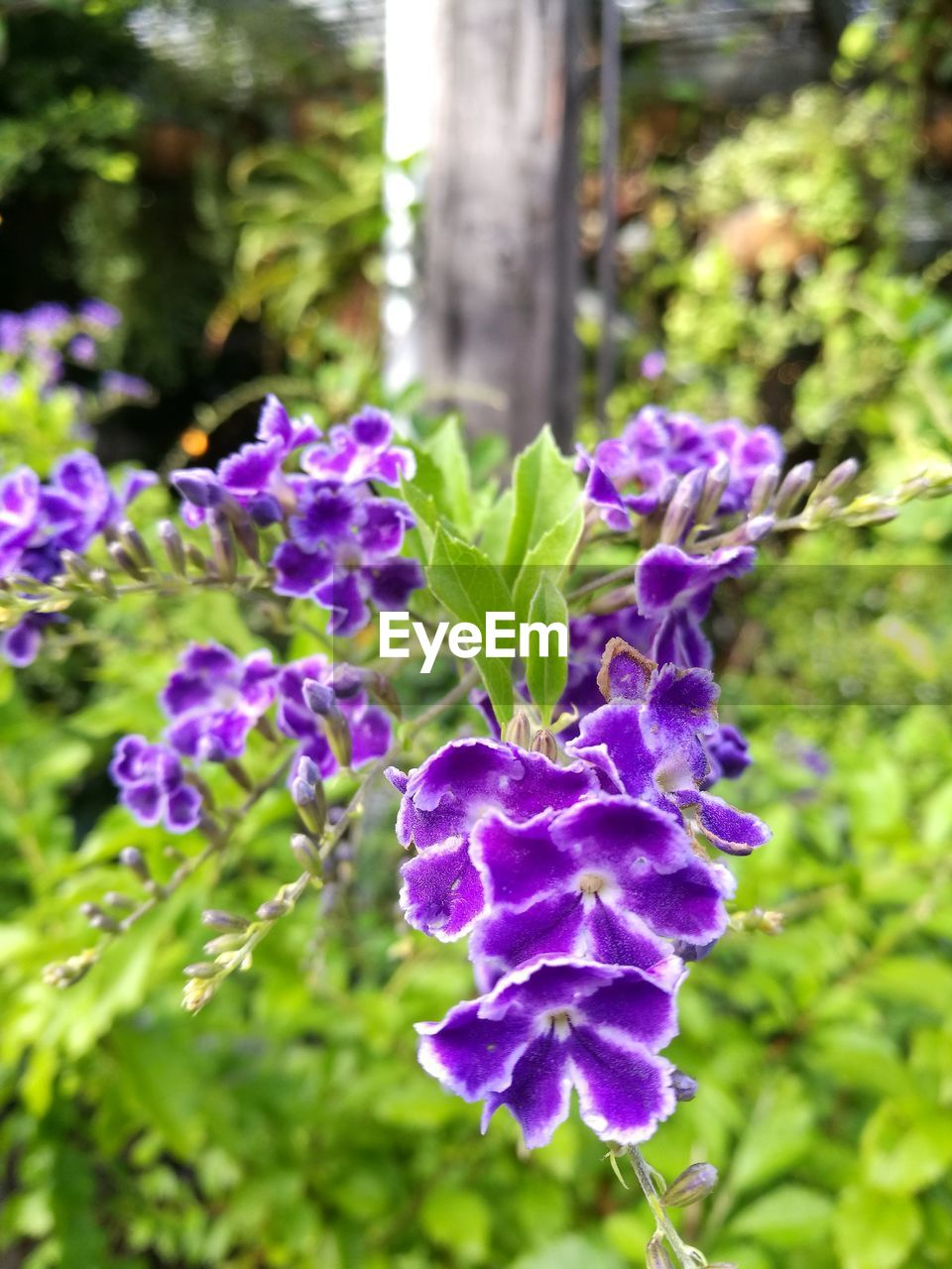 plant, flower, flowering plant, purple, growth, beauty in nature, vulnerability, freshness, close-up, fragility, nature, no people, focus on foreground, day, outdoors, plant part, leaf, petal, green color, inflorescence, flower head, lilac
