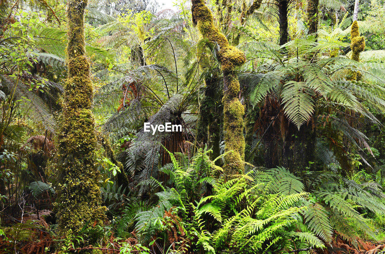 Plants and trees in rainforest
