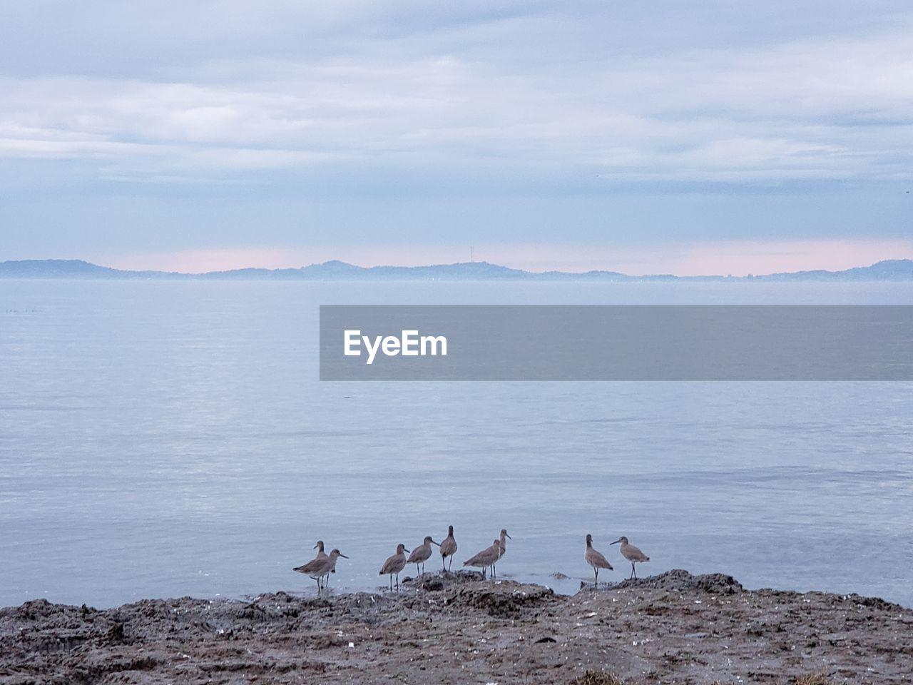 View of birds on beach against sky