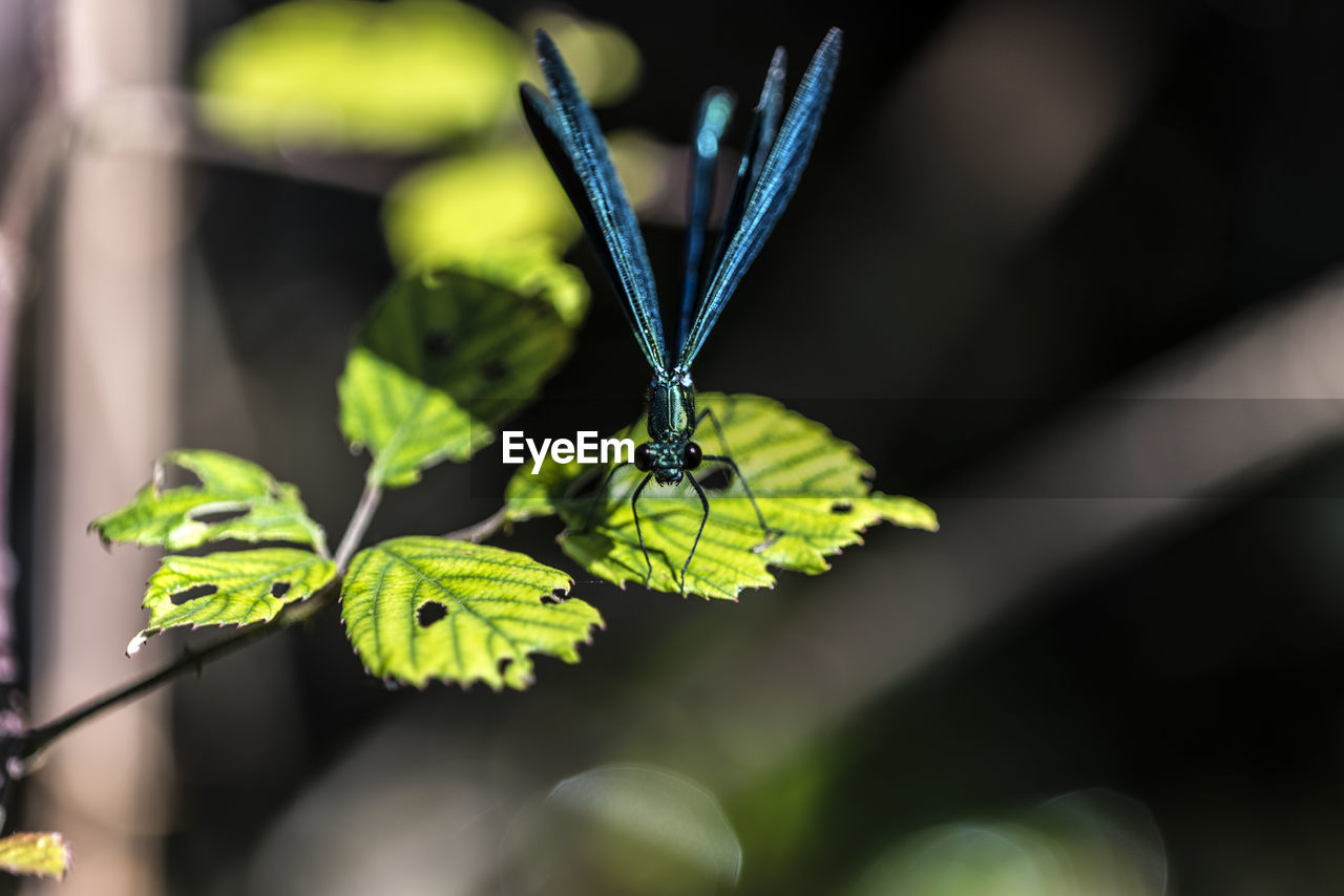 leaf, plant part, green color, plant, animal wildlife, beauty in nature, close-up, growth, invertebrate, one animal, animal themes, insect, focus on foreground, animal, animals in the wild, nature, no people, day, selective focus, flower, animal wing, outdoors, butterfly - insect, butterfly