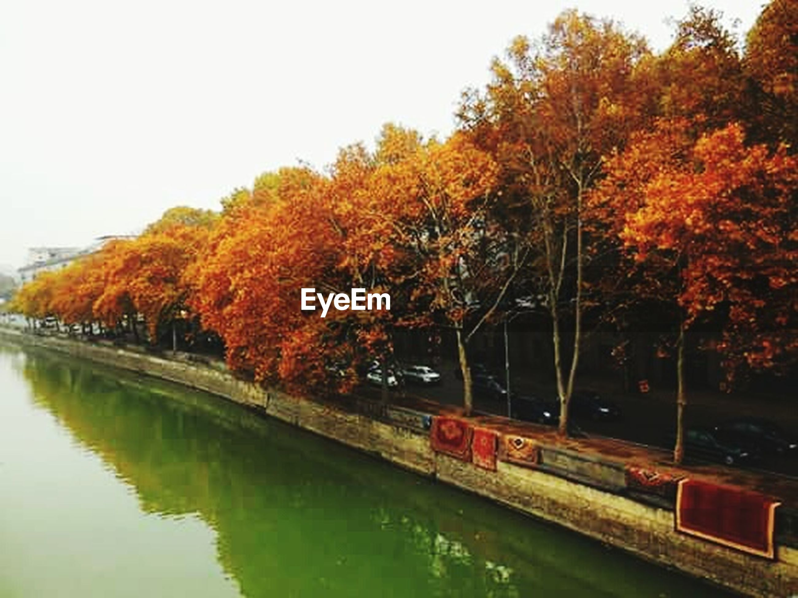tree, autumn, change, orange color, leaf, reflection, transportation, nature, beauty in nature, scenics, no people, outdoors, water, mode of transport, river, day, sky, city