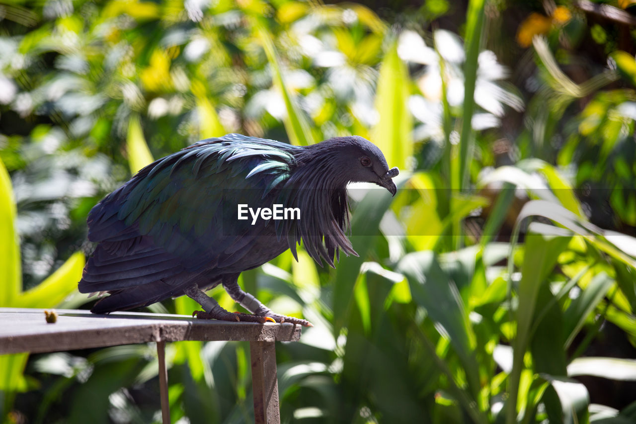 bird, animal themes, animal, animal wildlife, animals in the wild, vertebrate, one animal, perching, plant, focus on foreground, no people, day, tree, black color, green color, nature, growth, outdoors, close-up, side view, beak