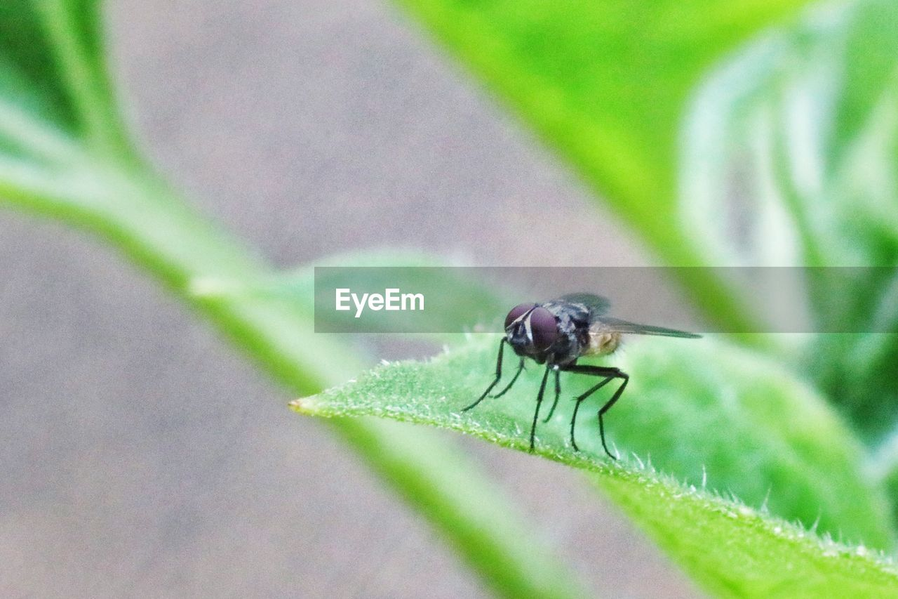insect, invertebrate, animal themes, animals in the wild, animal wildlife, animal, one animal, plant part, leaf, close-up, green color, plant, day, no people, selective focus, nature, animal wing, zoology, fly, growth, outdoors, animal eye