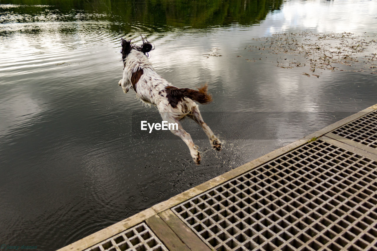 High Angle View Of Dog Jumping In Lake