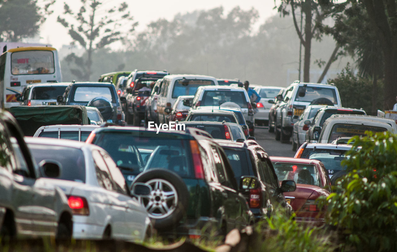 mode of transportation, transportation, motor vehicle, car, land vehicle, day, tree, in a row, traffic, road, no people, plant, outdoors, nature, selective focus, traffic jam, street, city, stationary