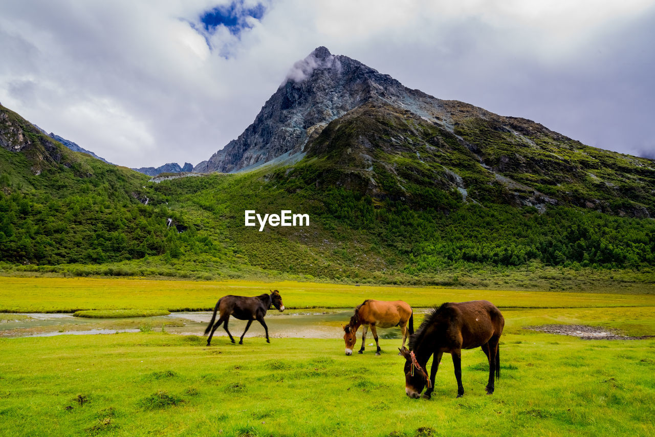 mountain, mountain range, horse, nature, animal themes, sky, mammal, landscape, green color, field, tranquil scene, domestic animals, outdoors, beauty in nature, cloud - sky, scenics, grass, no people, day, grazing