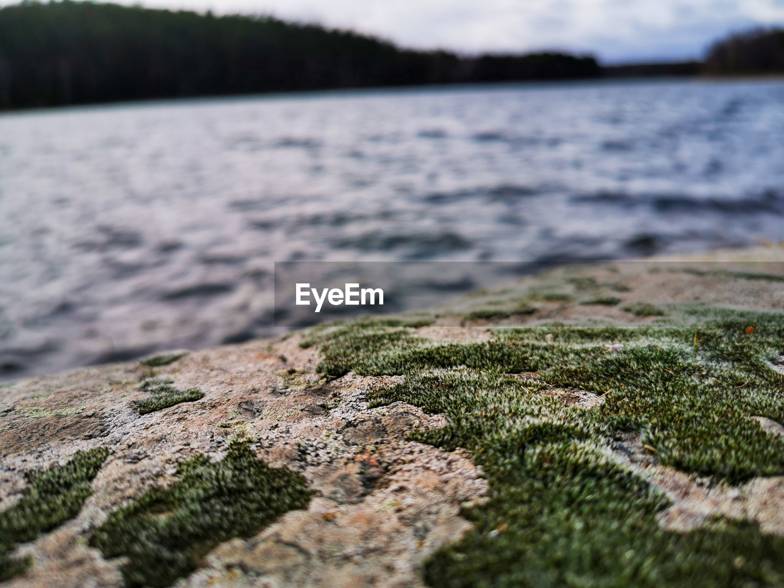 Moss growing on rock by lake