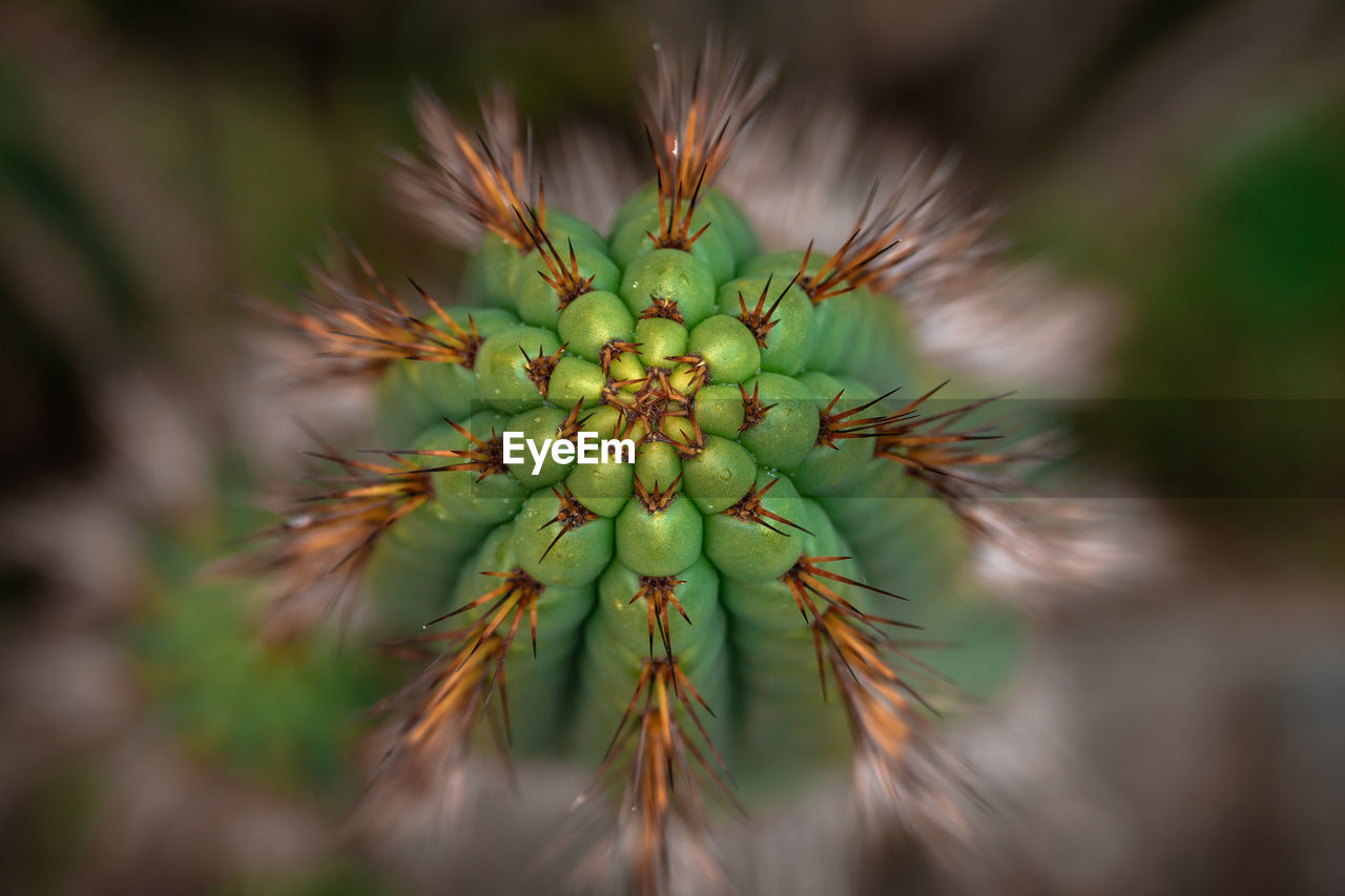 green color, close-up, selective focus, no people, growth, plant, day, nature, beauty in nature, succulent plant, outdoors, cactus, focus on foreground, spiked, sharp, macro, insect, thorn, invertebrate, animals in the wild, spiky