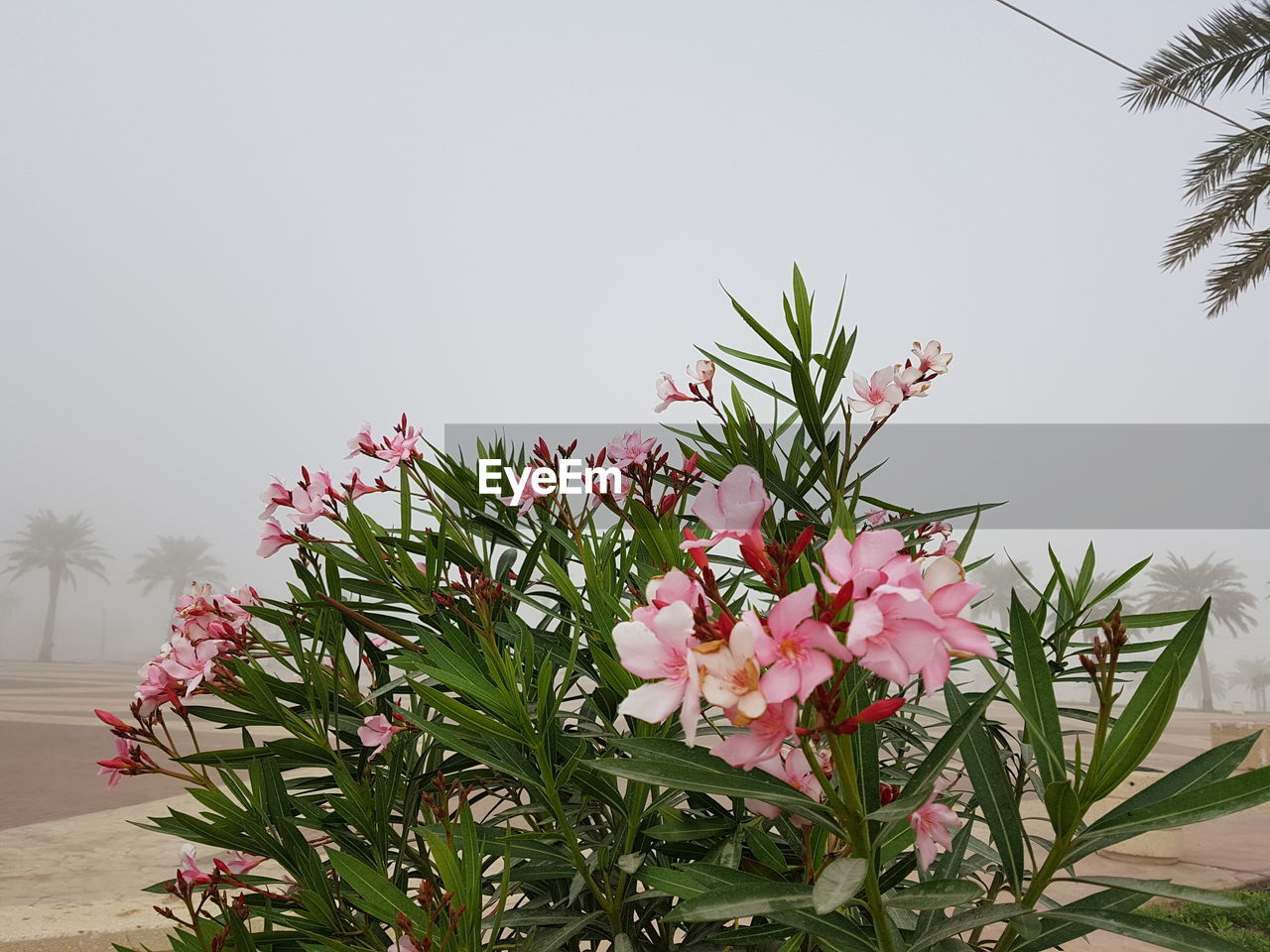 flower, growth, nature, pink color, beauty in nature, no people, plant, clear sky, freshness, blooming, tree, outdoors, sky, fragility, flower head, day
