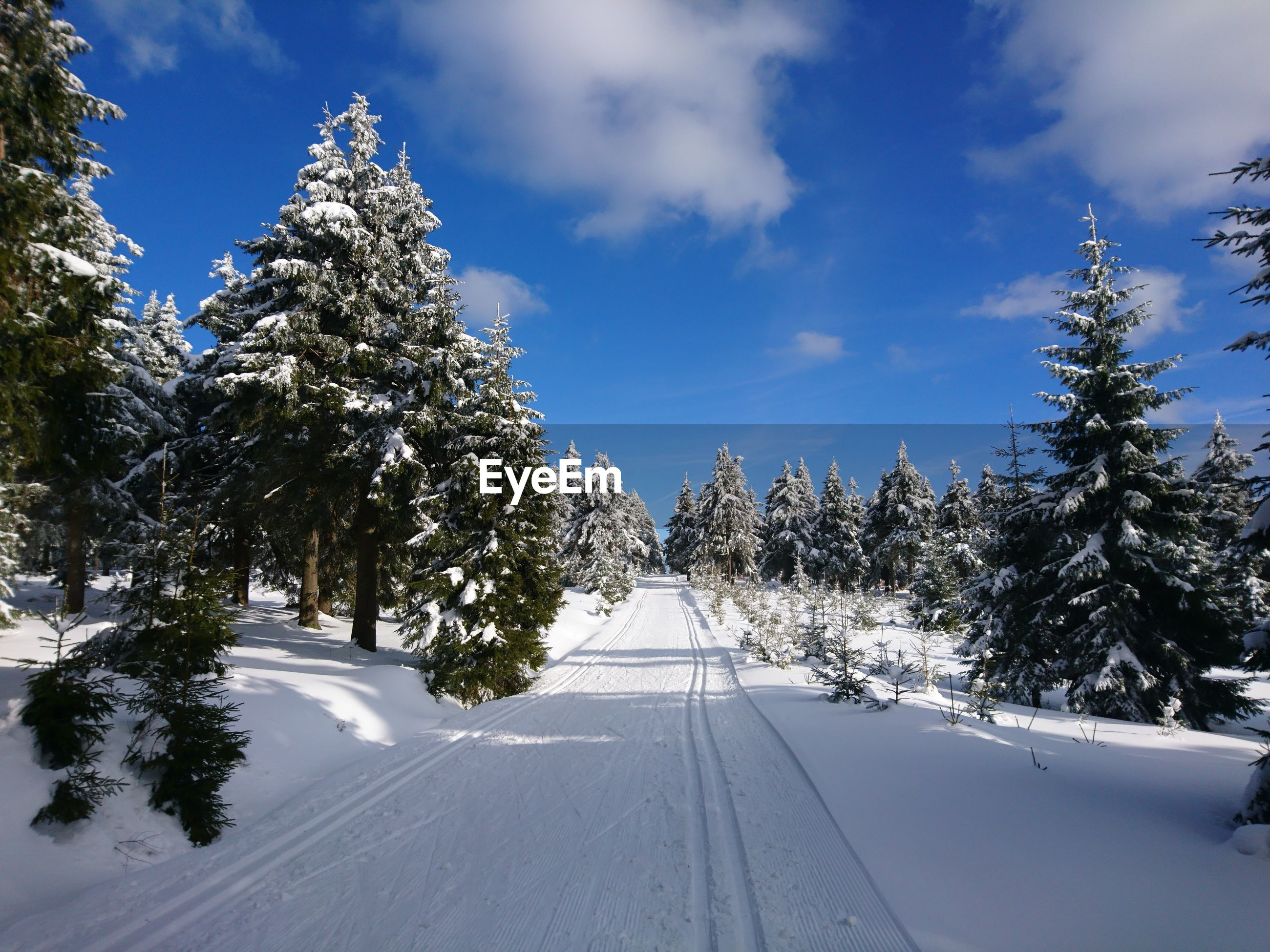 TREES ON SNOW COVERED ROAD