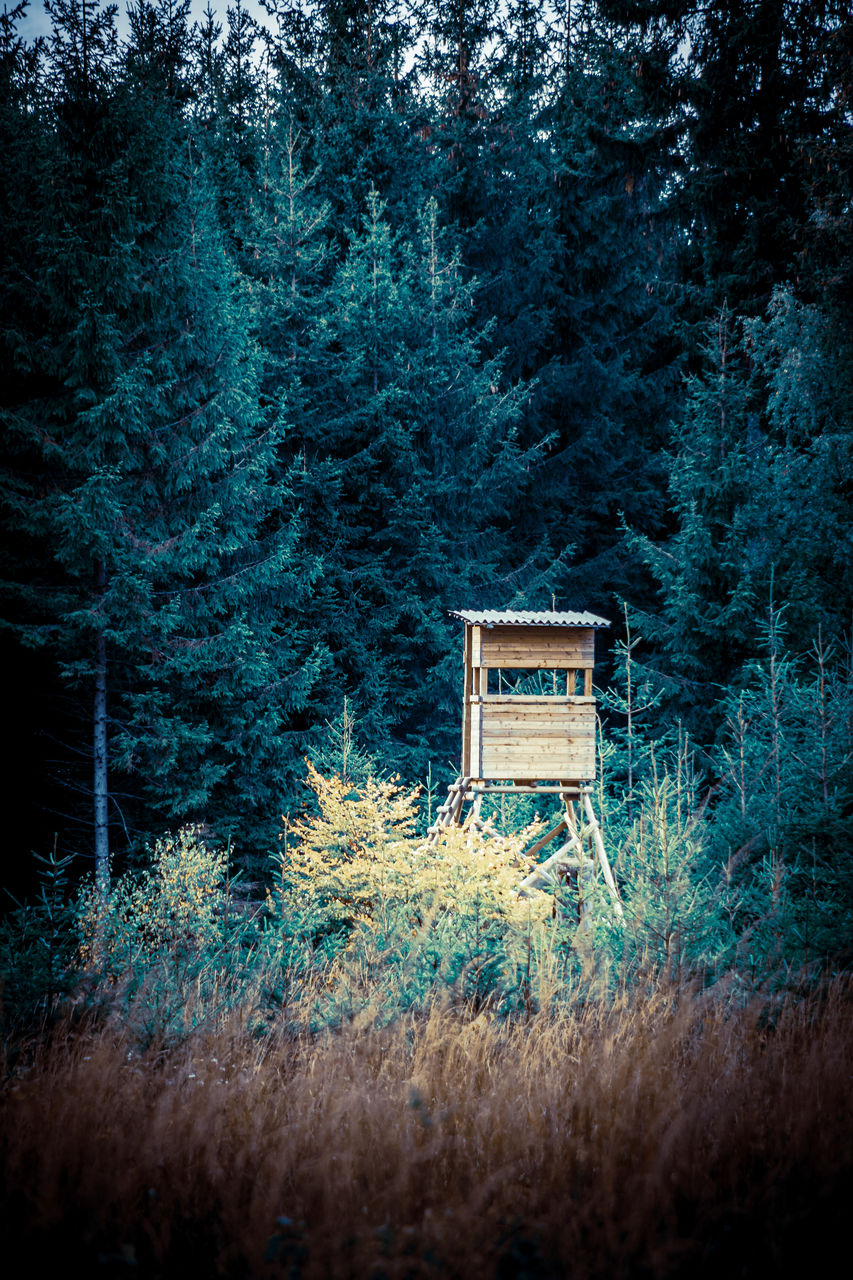 plant, tree, forest, nature, no people, land, growth, woodland, architecture, day, tranquility, wood - material, built structure, abandoned, beauty in nature, outdoors, tranquil scene, scenics - nature, old, hut