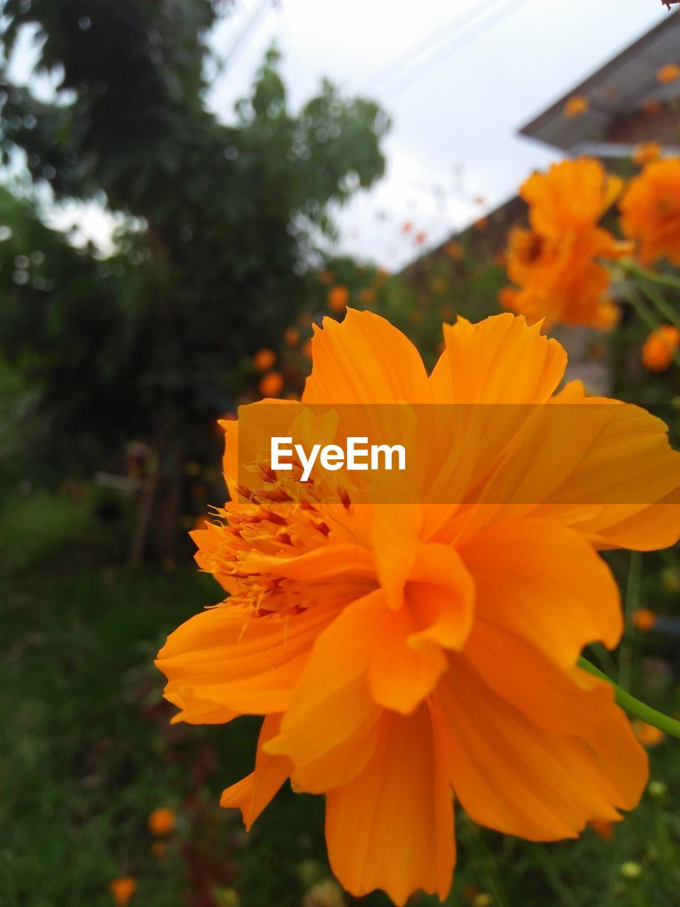flower, petal, beauty in nature, nature, orange color, fragility, flower head, growth, plant, blooming, freshness, focus on foreground, outdoors, close-up, no people, yellow, marigold, day