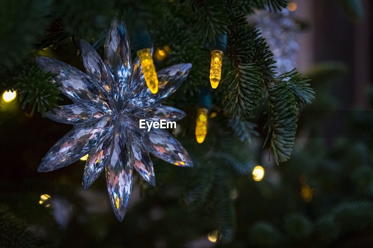 celebration, plant, tree, christmas, focus on foreground, christmas tree, close-up, christmas decoration, no people, growth, holiday, nature, selective focus, beauty in nature, decoration, illuminated, celebration event, christmas lights, holiday - event, outdoors, christmas ornament