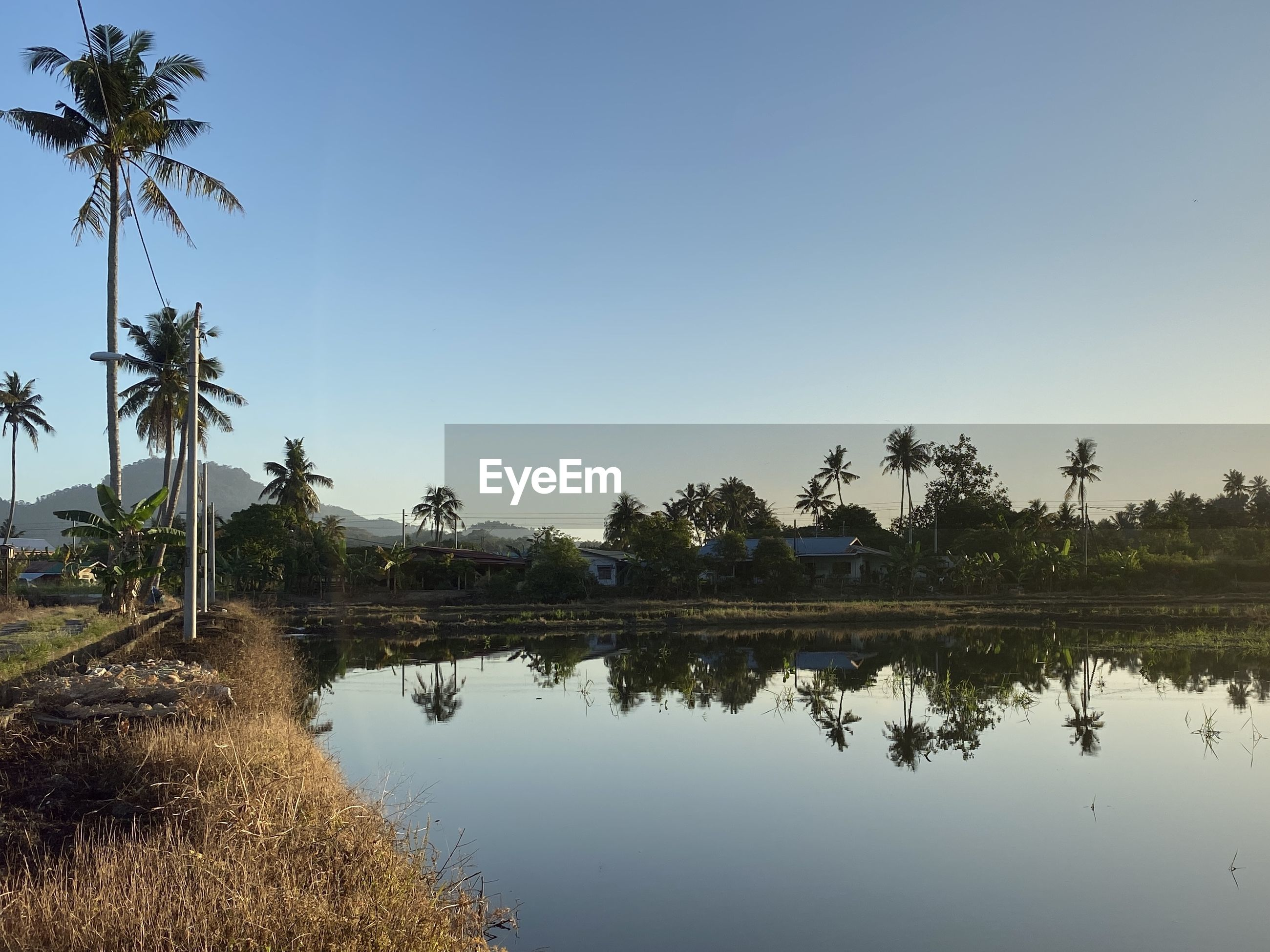 PALM TREES BY LAKE AGAINST SKY