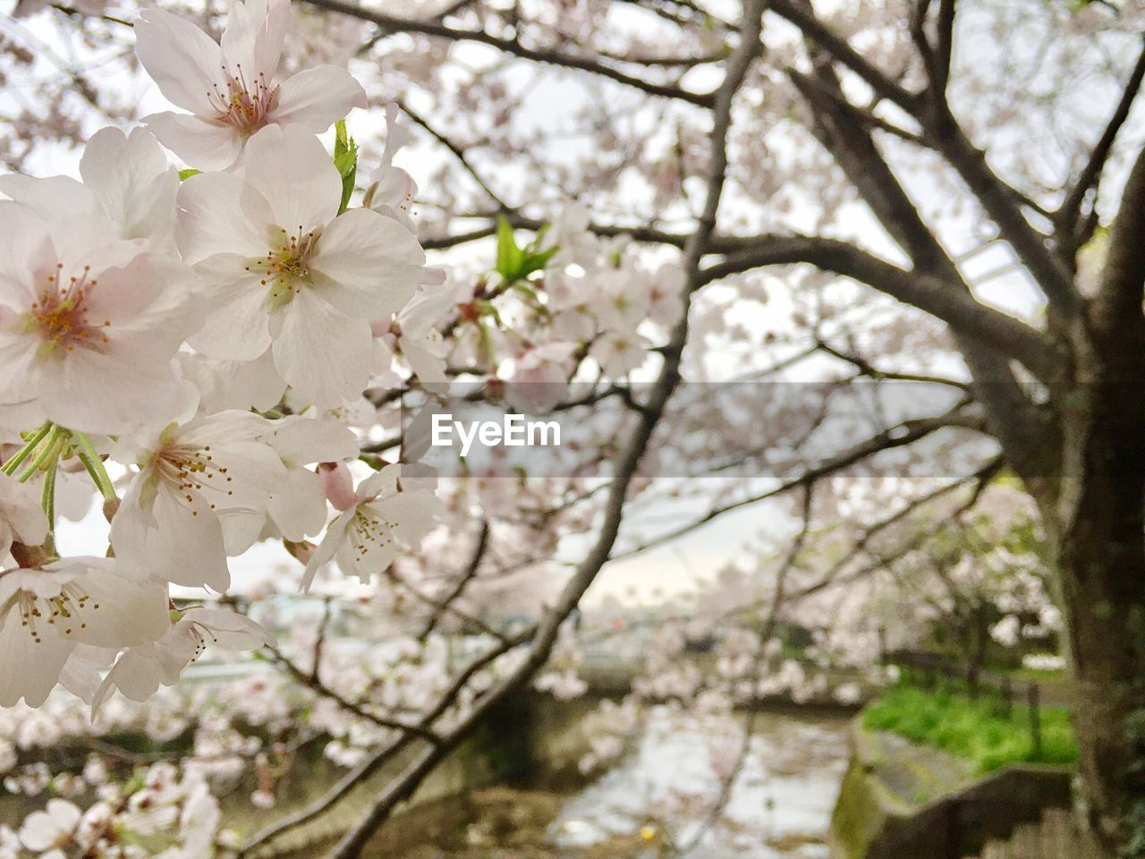 flower, tree, blossom, fragility, springtime, growth, beauty in nature, branch, nature, apple blossom, white color, apple tree, freshness, botany, orchard, no people, day, close-up, outdoors, blooming, flower head