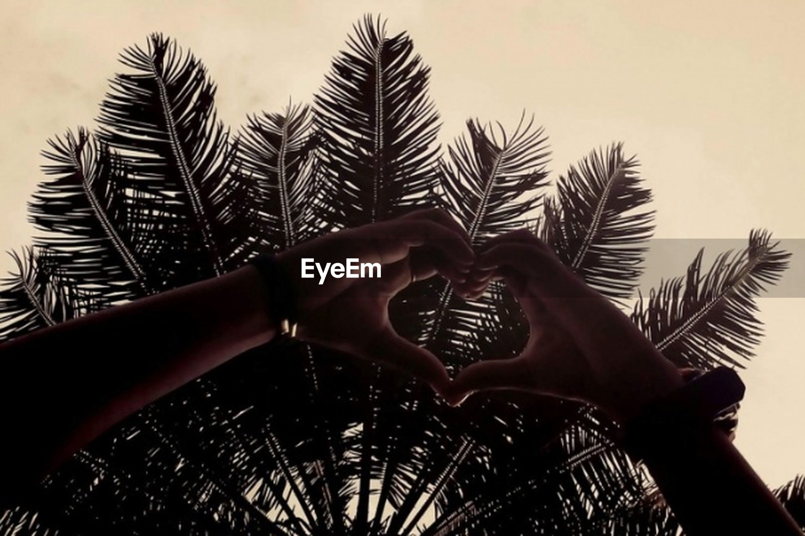 human hand, human body part, palm tree, one person, real people, close-up, outdoors, tree, palm, day, sky, nature, people