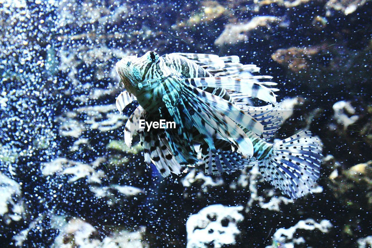 animal themes, water, animal, one animal, animal wildlife, sea, animals in the wild, underwater, vertebrate, swimming, nature, no people, animals in captivity, motion, fish, outdoors, glass - material, day, sea life, undersea, marine, snowing