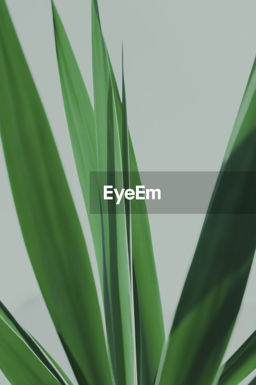 LOW ANGLE VIEW OF PALM LEAVES
