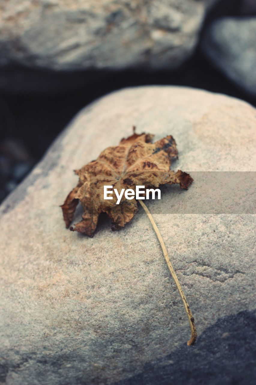 one animal, animal themes, animals in the wild, no people, nature, close-up, rock - object, outdoors, leaf, day, animal wildlife