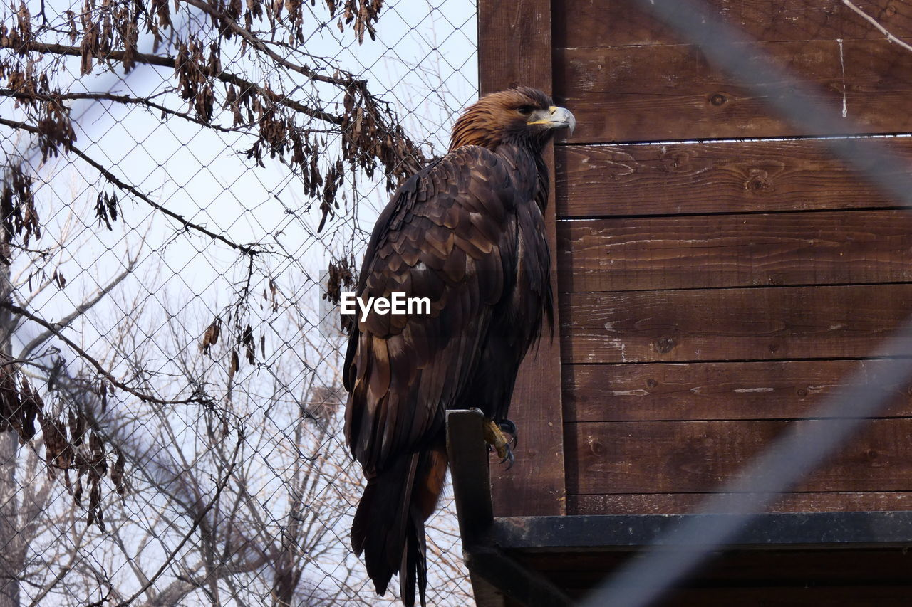 bird, animal, animal themes, vertebrate, animal wildlife, fence, one animal, boundary, animals in the wild, barrier, bird of prey, day, perching, animals in captivity, nature, no people, wood - material, security, metal, protection, outdoors, zoo, eagle - bird